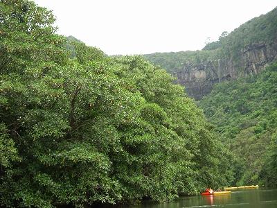 沖縄アルバム(8)西表島の川と滝_d0116009_1555077.jpg