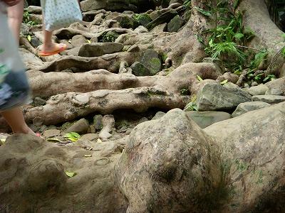 沖縄アルバム(8)西表島の川と滝_d0116009_1585091.jpg