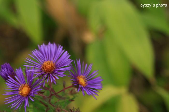 秋に咲く花_a0071514_21502793.jpg