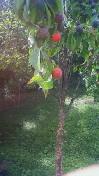 b0109427_201133100.jpg
