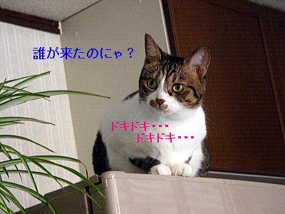 b0097848_12522715.jpg