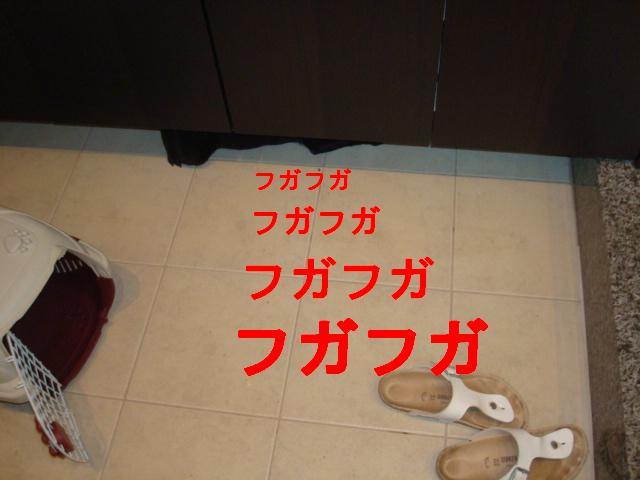 e0134873_14212738.jpg