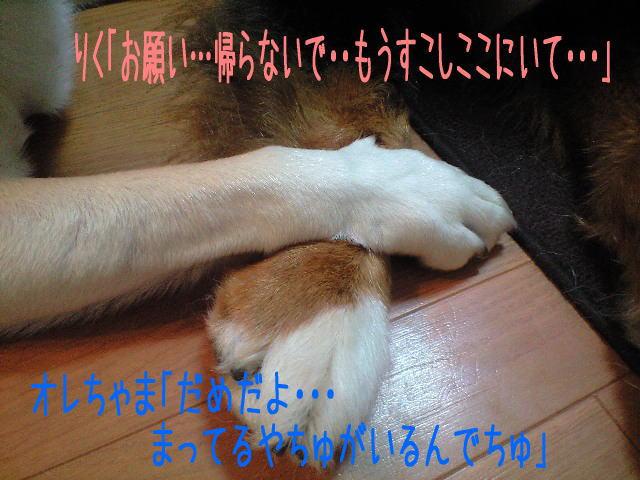 f0187974_18282485.jpg