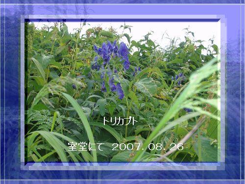 c0129682_21531545.jpg