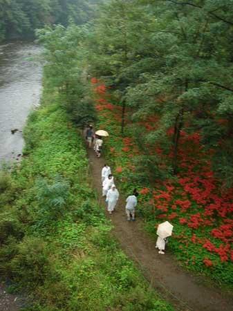 高麗の里「巾着田の彼岸花」を見てきました。_f0030085_18485739.jpg