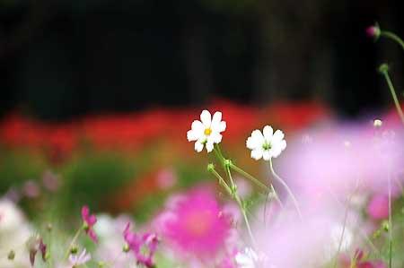 高麗の里「巾着田の彼岸花」を見てきました。_f0030085_1915614.jpg