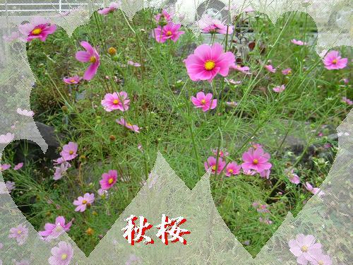 d0048312_20441431.jpg