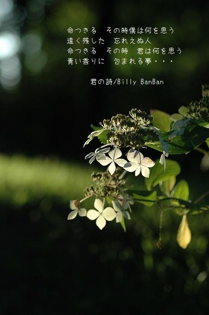 b0152416_0371430.jpg