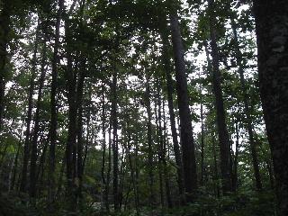初秋の岩手山登山_f0105112_15293237.jpg
