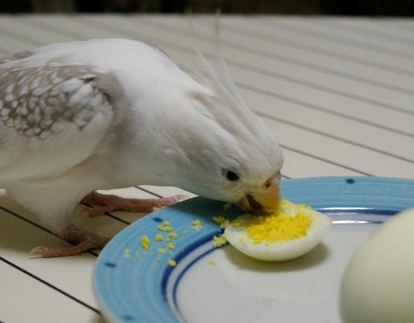 卵 過ぎ ゆで 食べ