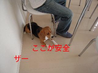b0104420_16262043.jpg