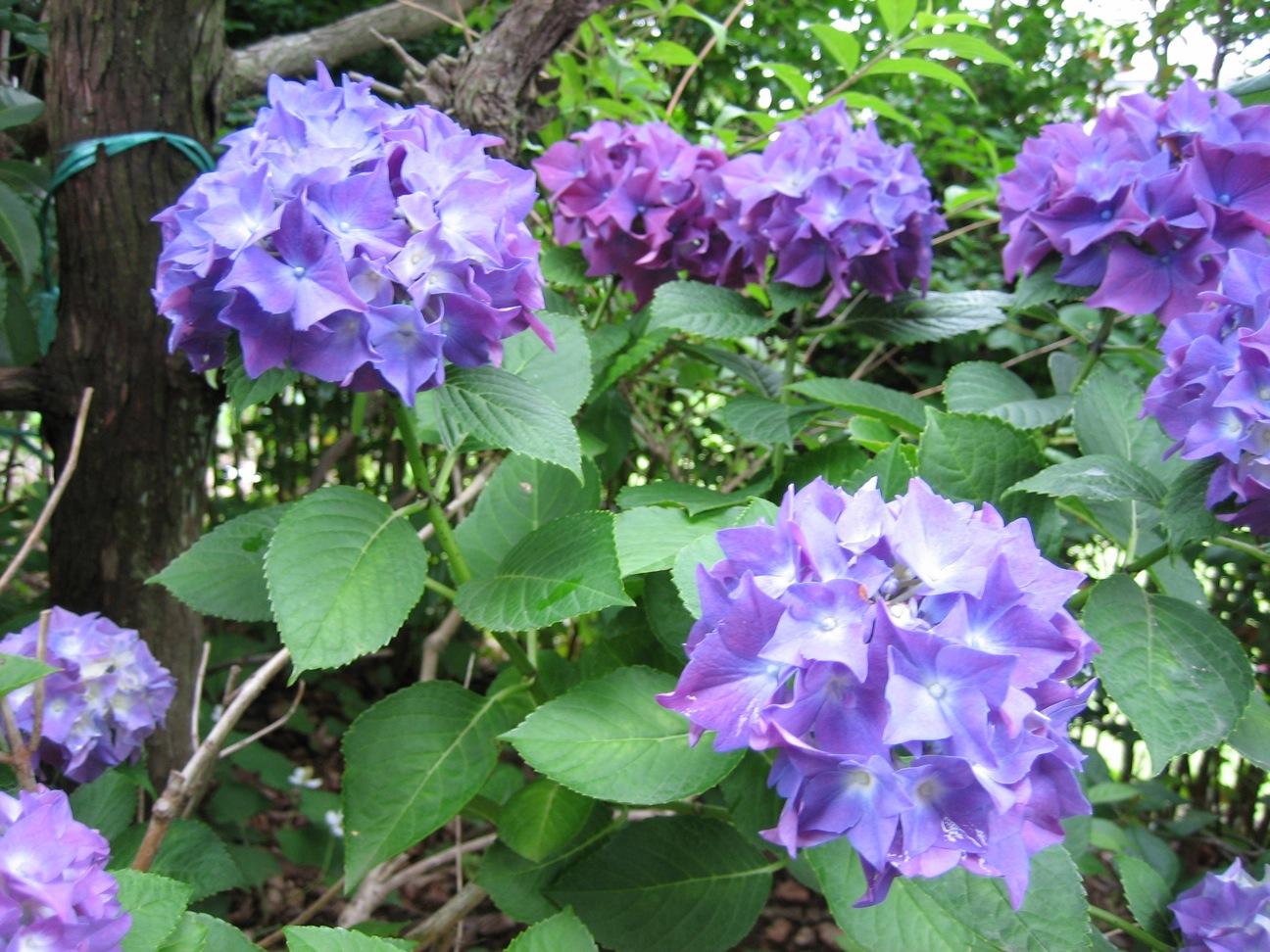 実家に咲く夏の花_d0038951_837793.jpg