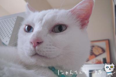 寝る番猫_e0031853_19373474.jpg