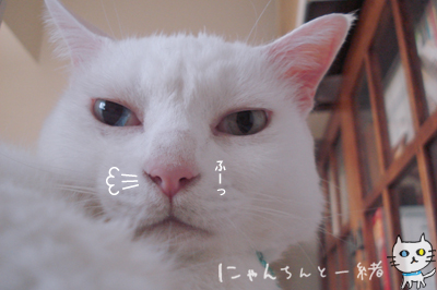 寝る番猫_e0031853_19381249.jpg