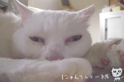 寝る番猫_e0031853_19383176.jpg