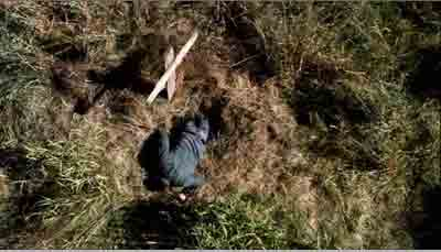 シーズン4 第1話「Lazarus Rising」(1)_b0064176_27555.jpg