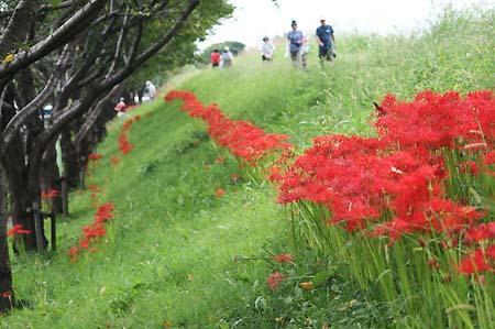 やっぱり彼岸花を見に行きました。_f0030085_16551096.jpg