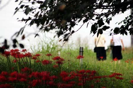 やっぱり彼岸花を見に行きました。_f0030085_16555670.jpg