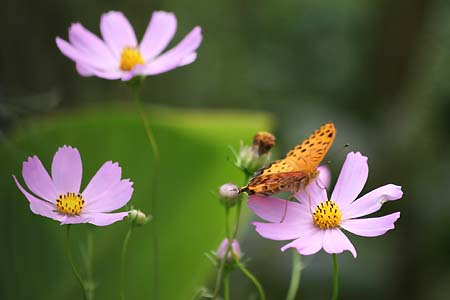 やっぱり彼岸花を見に行きました。_f0030085_171819.jpg