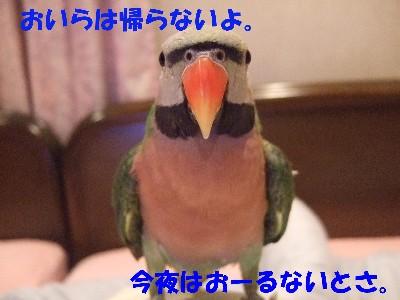 c0133013_11525229.jpg