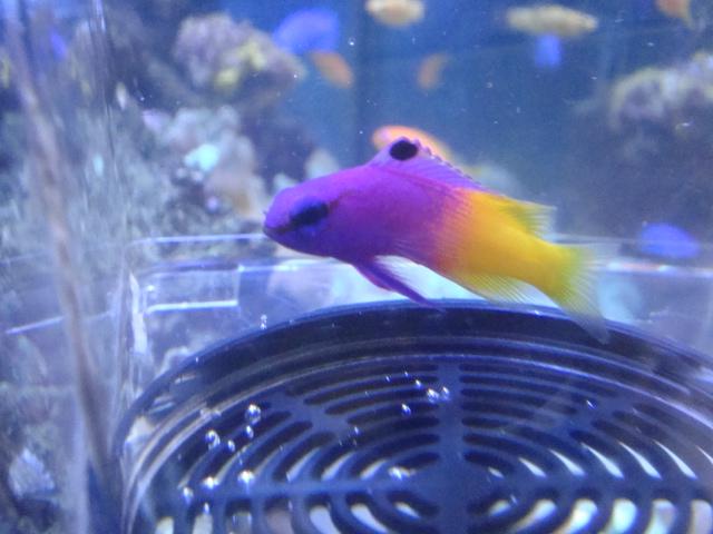 海水魚・サンゴ_f0189122_14425110.jpg