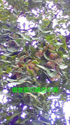 d0051146_18505777.jpg