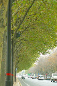 JPFA主催~パリで最新のトレンドを学ぶツアー~VOL.2_b0111306_22281960.jpg