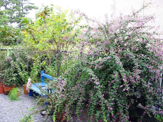 秋の花_f0129726_2228453.jpg