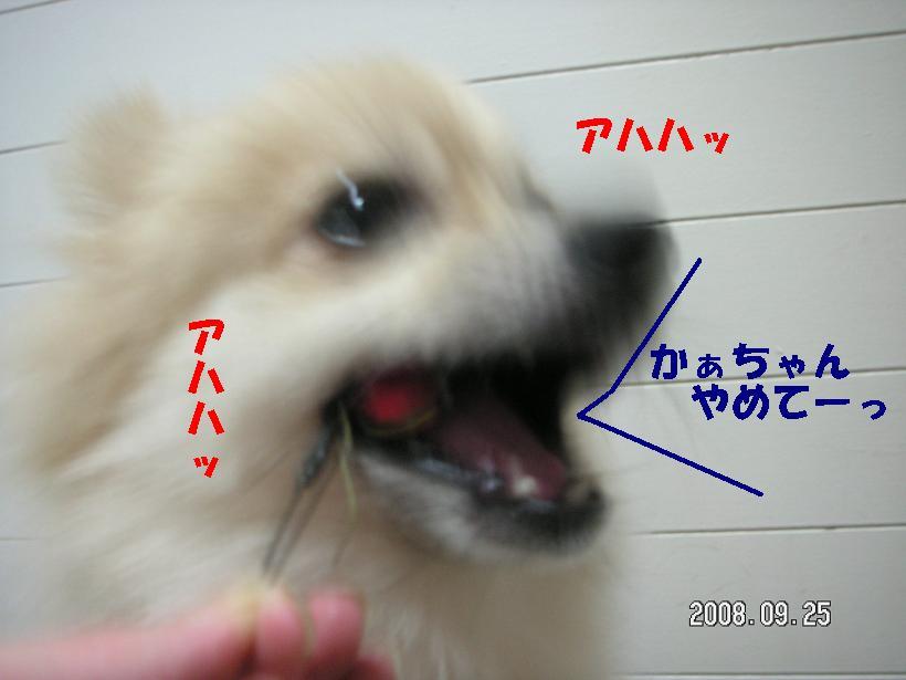 c0179136_1905676.jpg