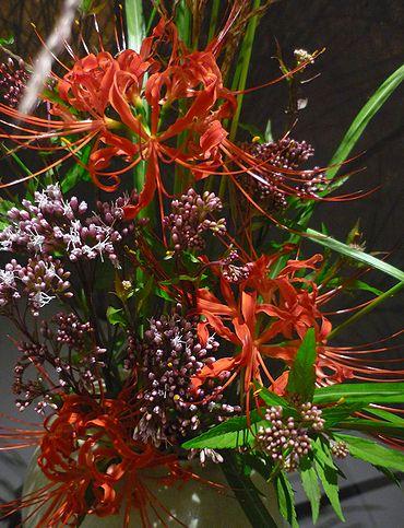 大分国体 2008  & 彼岸花 咲いて 秋ですね。。。☆。。.♡*†_a0053662_2113473.jpg