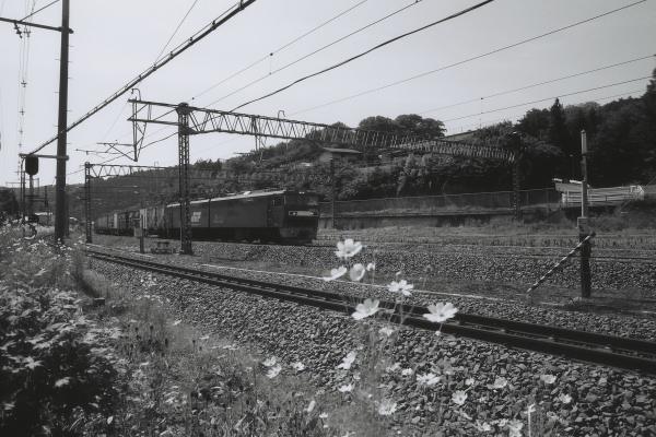 e0051186_1947587.jpg