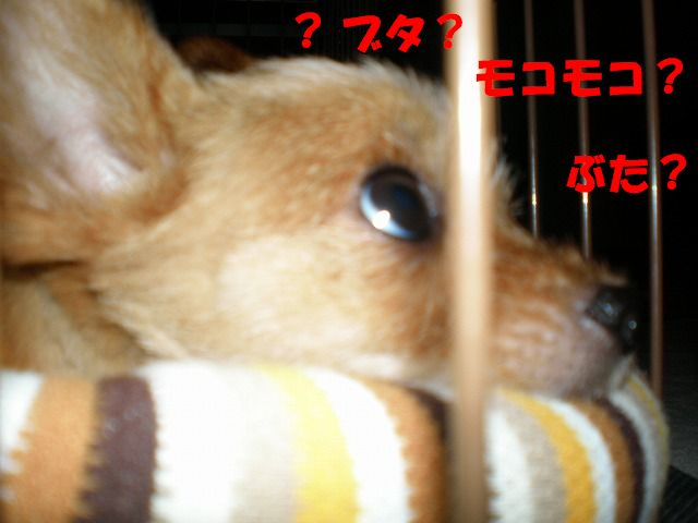 b0144519_1164677.jpg