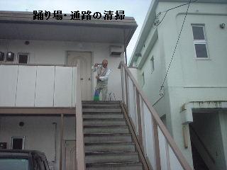 (*^0^*)ノ オォー!!スズメバチ_f0031037_2043529.jpg