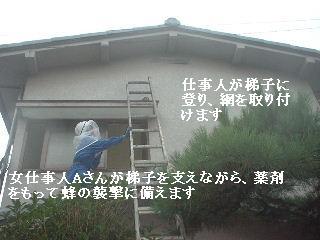 (*^0^*)ノ オォー!!スズメバチ_f0031037_2072591.jpg