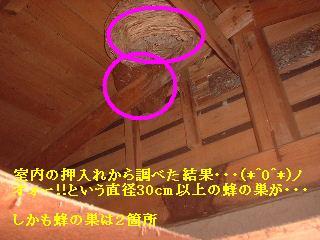 (*^0^*)ノ オォー!!スズメバチ_f0031037_2073691.jpg