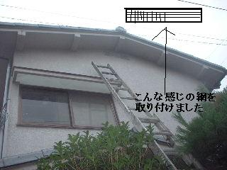 (*^0^*)ノ オォー!!スズメバチ_f0031037_208980.jpg