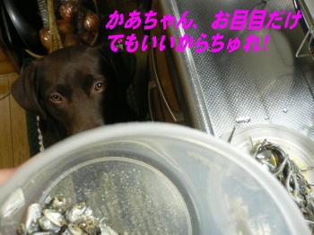d0013645_1616591.jpg