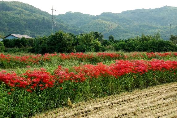 花のある風景_b0093754_0152375.jpg