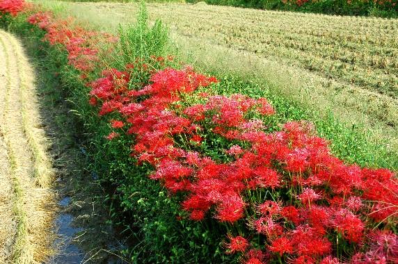 花のある風景_b0093754_015368.jpg