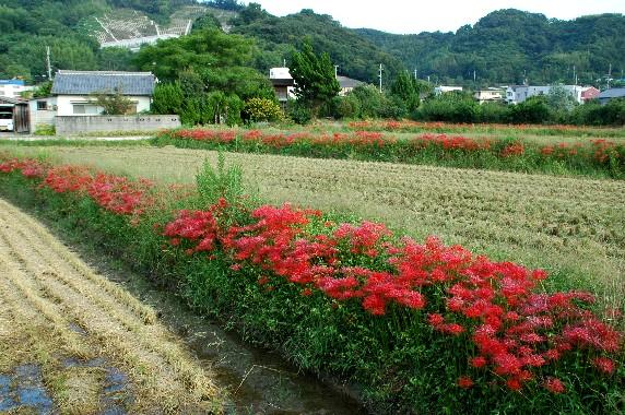 花のある風景_b0093754_0161084.jpg