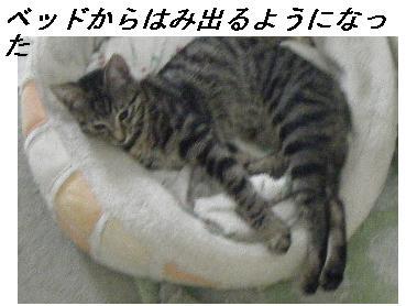 b0112380_18572975.jpg