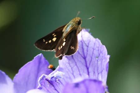 ダリア、色々と、今日の蝶写真_f0030085_1654045.jpg