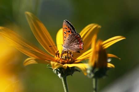 ダリア、色々と、今日の蝶写真_f0030085_1662377.jpg