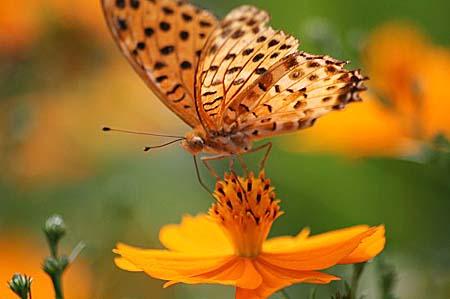 ダリア、色々と、今日の蝶写真_f0030085_1665135.jpg