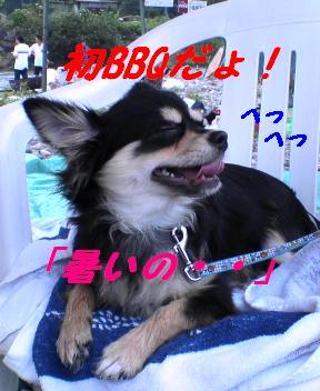 b0150088_1542613.jpg