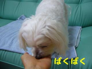 f0145192_16101444.jpg