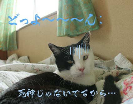 愛と桃=お笑いハリセンボン??_d0071596_17285636.jpg