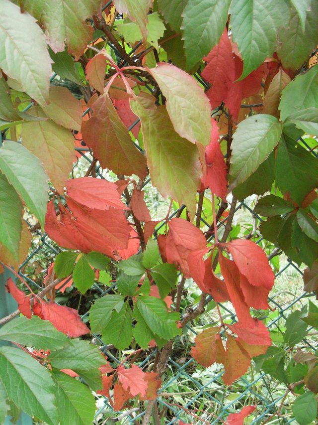 紅葉の始まり_c0025115_1803518.jpg