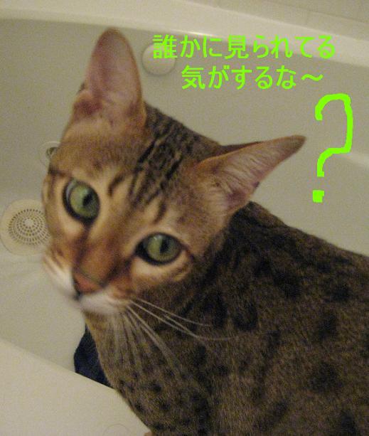 c0132537_9352269.jpg