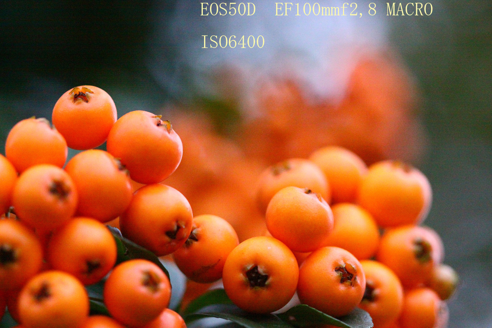 d0067451_17262962.jpg